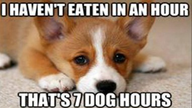 Dog-mEme