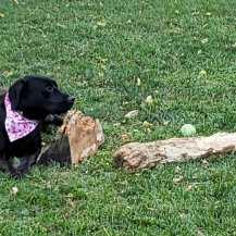 Kali and log